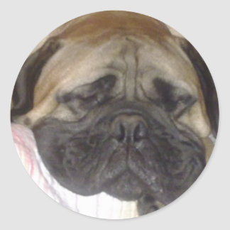 Bullmastiff Pabsy sticker 1