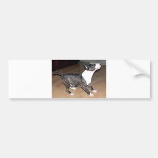 Bullterrier puppy bumper sticker