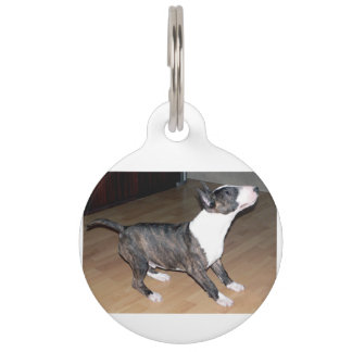 Bullterrier puppy pet name tag