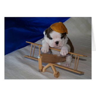 BullyBreeze - Pania - Aviator - Greeting Card