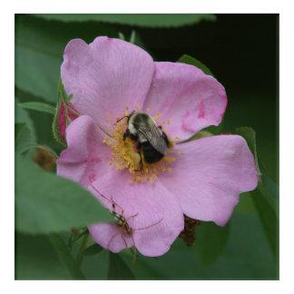 Bumble Bee and Flower, Acrylic Print. Acrylic Print