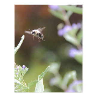 Bumble Bee Letterhead