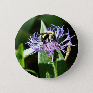 bumble bee,on a bachelor button