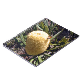 Bumble bee on banksia flower note books