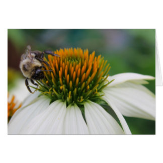 Bumble Bee on Flower Card