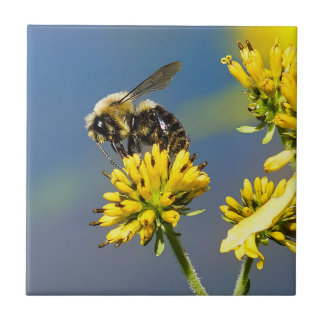 Bumble Bee on Yellow Wildflower Ceramic Photo Tile