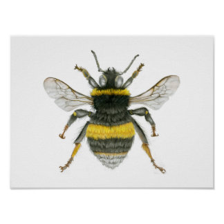 Bumble Bee Poster Print