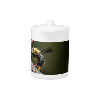 BUMBLE BEE RURAL QUEENSLAND AUSTRALIA