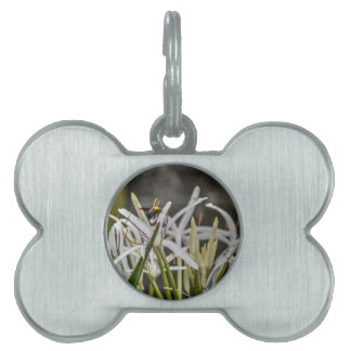 BUMBLE BEE RURAL QUEENSLAND AUSTRALIA PET TAG