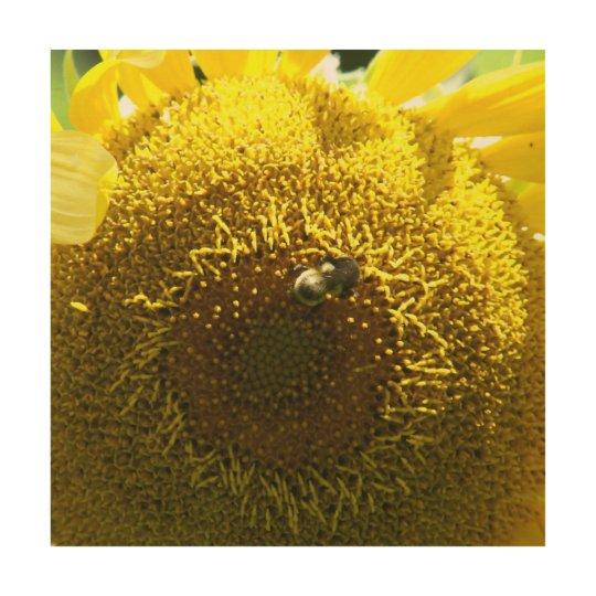 Bumble Bee, Wood Photo Print. Wood Print