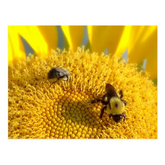 Bumble & Honey bee Postcard