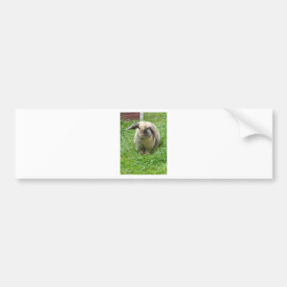 Bumble Rabbit Bumper Sticker