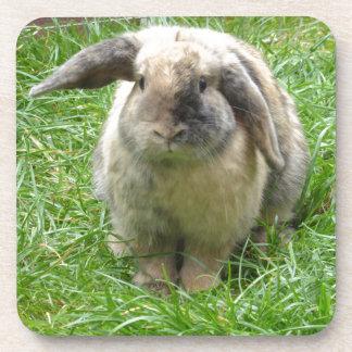 Bumble Rabbit Coaster