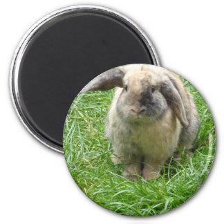 Bumble Rabbit Magnet