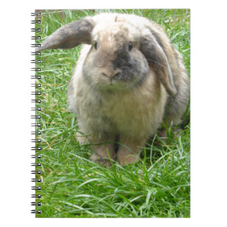 Bumble Rabbit Notebooks