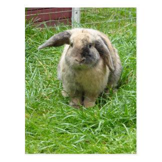 Bumble Rabbit Postcard