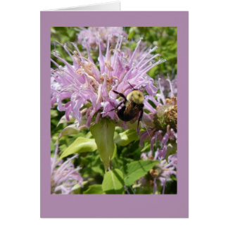 Bumblebee on Beebalm Blank Note Card