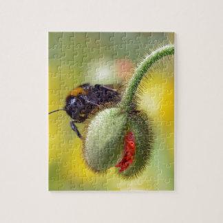 Bumblebee on bud of poppy jigsaw puzzle