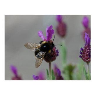 Bumblebee on lavender postcard