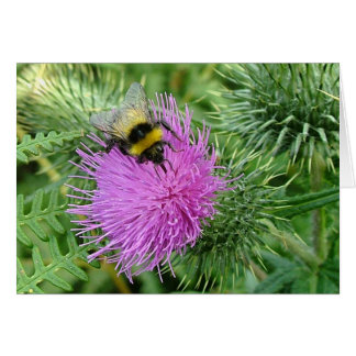 Bumblebee on thistle card