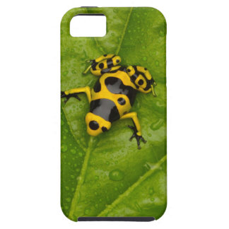 Bumblebee Poison Dart Frog Case For The iPhone 5