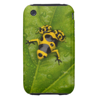 Bumblebee Poison Dart Frog iPhone 3 Tough Cover
