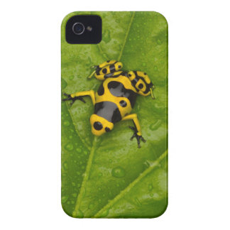 Bumblebee Poison Dart Frog iPhone 4 Cover