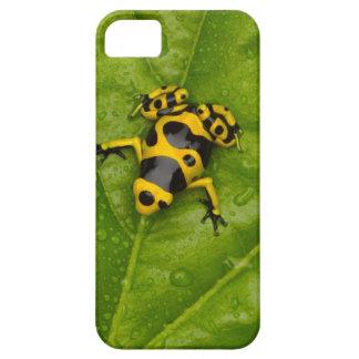 Bumblebee Poison Dart Frog iPhone 5 Cases