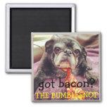 Bumblesnot magnet:  got bacon?