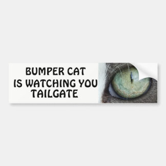 Bumper Cat is watching TAILGATE 38 Bumper Sticker