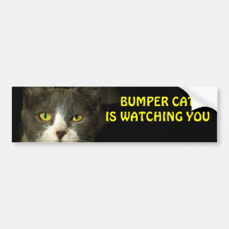 Bumper Cat is watching you 3 Bumper Sticker