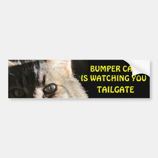 Bumper Cat is Watching You TAILGATE 5 Bumper Sticker