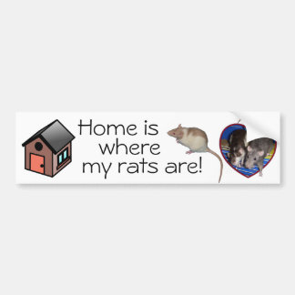 Bumper Sticker: Home is where my rats are! Bumper Sticker