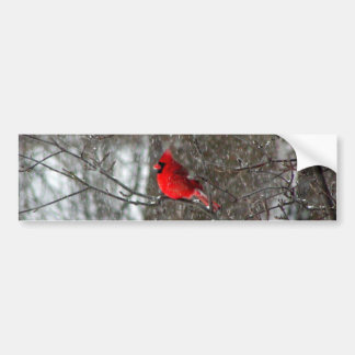 bumper sticker with photo of male cardinal