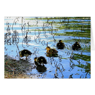 Bunch Of Baby Ducks Card