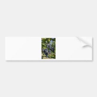 Bunch of blue grapes bumper sticker