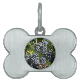 Bunch of blue grapes pet ID tag