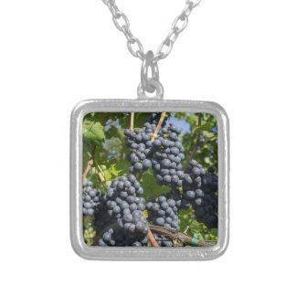 Bunch of blue grapes silver plated necklace
