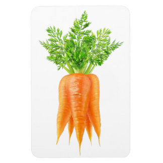 Bunch of carrots magnet