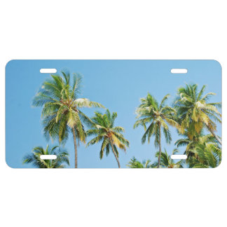 Bunch Of Coconut Palm Tree License Plate