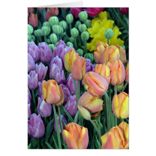 Bunch of colorful tulips card