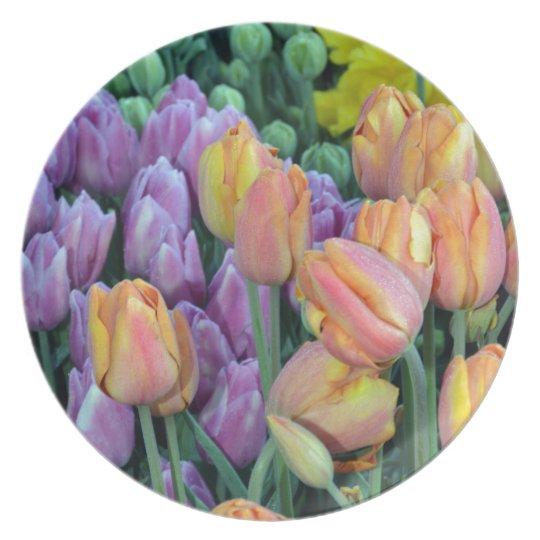 Bunch of colorful tulips dinner plate