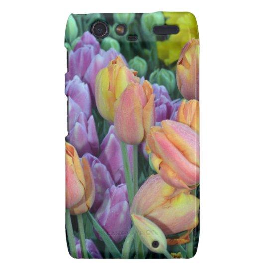 Bunch of colorful tulips motorola droid RAZR case