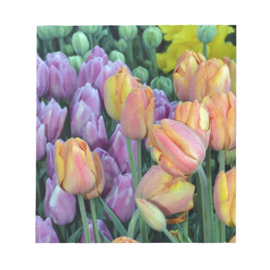 Bunch of colorful tulips notepad