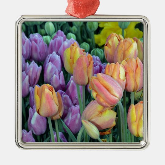 Bunch of colorful tulips Silver-Colored square ornament