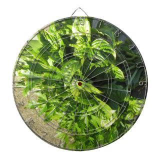 Bunch of fresh herbs dartboard with darts