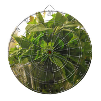 Bunch of fresh herbs from garden dartboard with darts