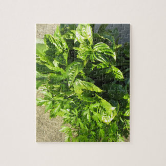 Bunch of fresh herbs puzzles