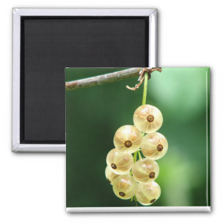 Bunch of gooseberries-square magnet