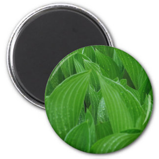 Bunch of Hosta Leaves with Raindrops 2 Inch Round Magnet